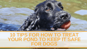 10 Tips for How to Treat Your Pond to Keep it Safe for Dogs