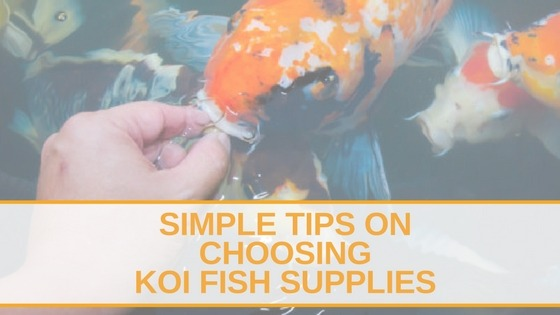Choosing Koi Fish Supplies