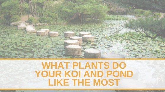 What Plants DO Your Koi and Pond Like The Most