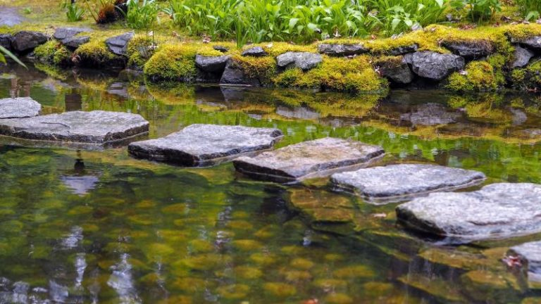 Koi Pond Winter Ready