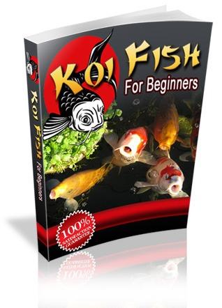 kio care for beginners