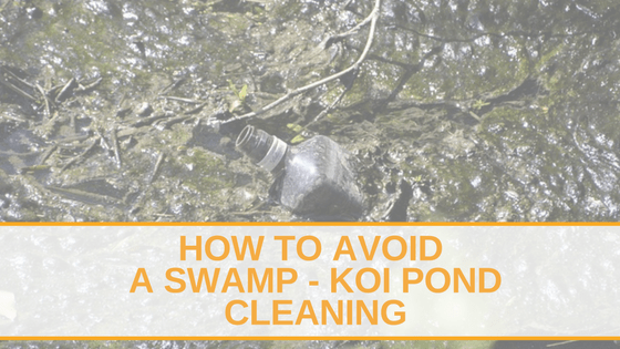 How To Avoid a Swamp - Koi Pond Cleaning
