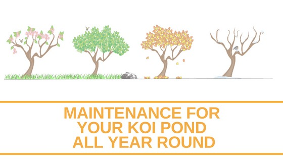 Maintenance For Your Ponds From Summer To Winter And Everything In Between