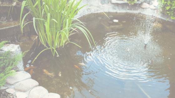 Design a koi pond