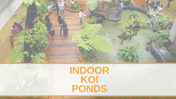 Indoor Koi Pond