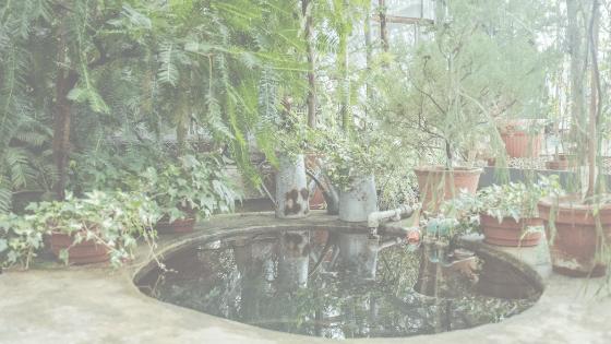 Indoor Koi Ponds