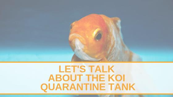 Lets talk about the koi quarantine tank