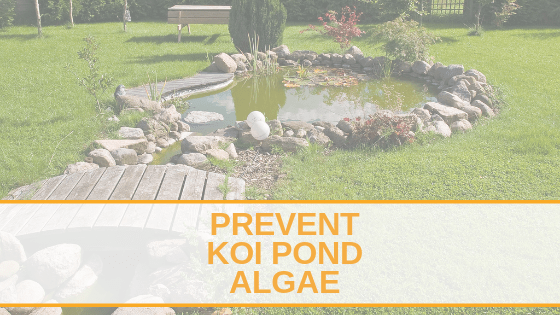 Prevent koi pond algae