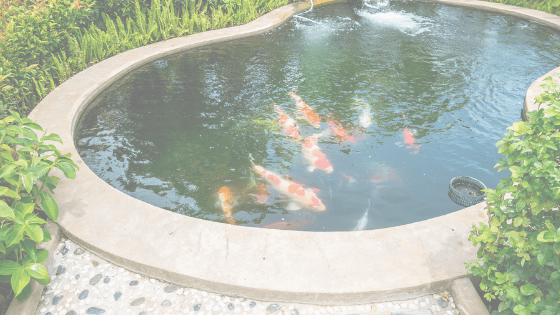 What's In The Water Of Your Koi Pond?