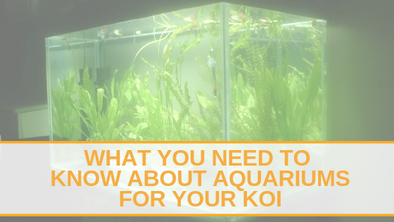 WHAT YOU NEED TO KNOW ABOUT AQUARIUMS FOR YOUR KOI