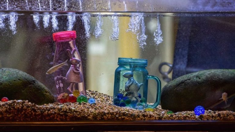 koi fish in a fish tank