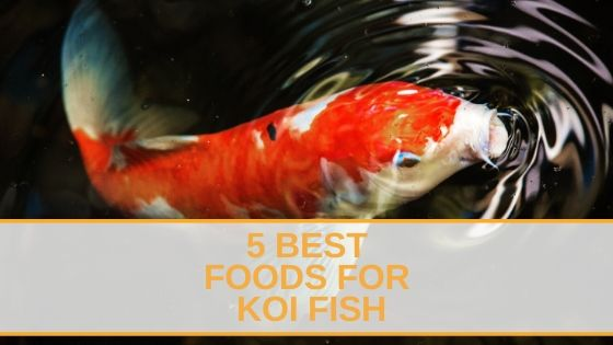 5 Best Foods for Koi Fish