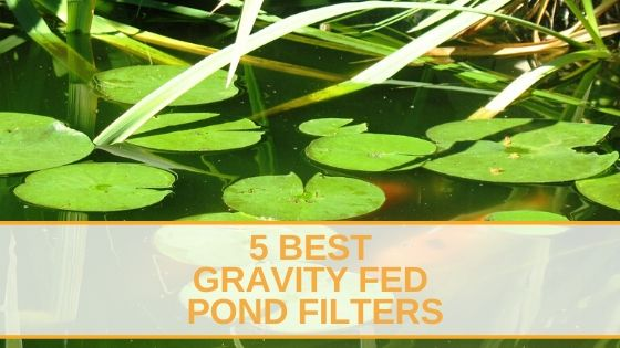 Gravity Fed Pond Filters