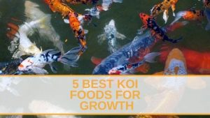 5 Best Koi Foods For Growth