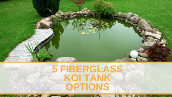 5 Fiberglass Koi Tank Options