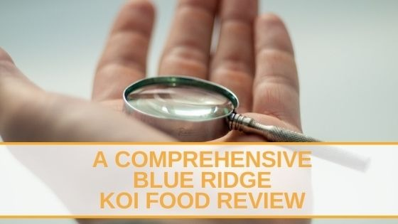 A Comprehensive Blue Ridge Koi Food Review