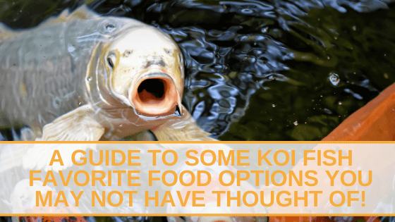 A Guide to Some Koi Fish Favorite Food Options You May Not Have Thought Of