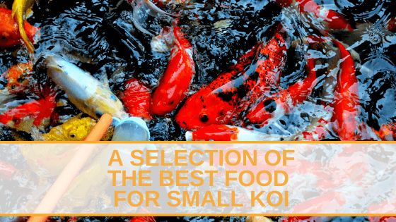 A Selection of The Best Food For Small Koi
