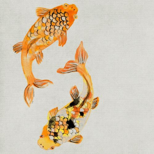 About Koi Fish