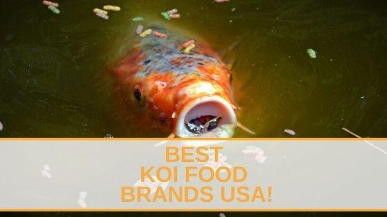 Best Koi Food Brands USA