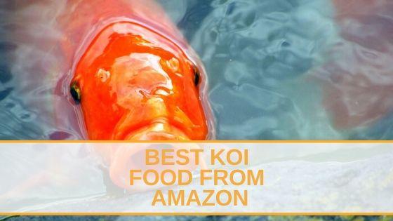 Best Koi Food from Amazon