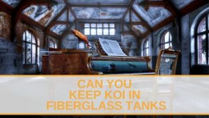 Can You Keep Koi in Fiberglass Tanks