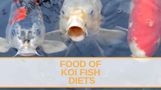 Food Of Koi Fish Diets