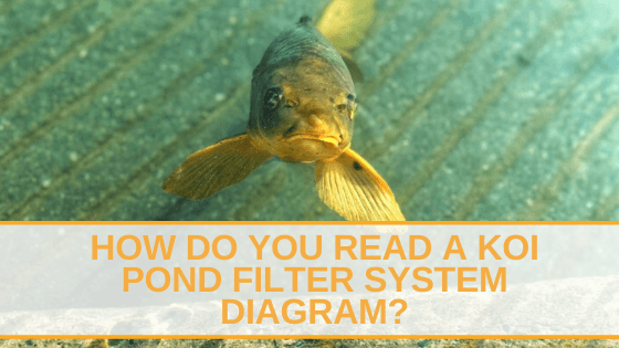 How Do You Read a Koi Pond Filter System Diagram_