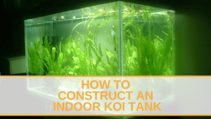 How to Construct An Indoor Koi Tank