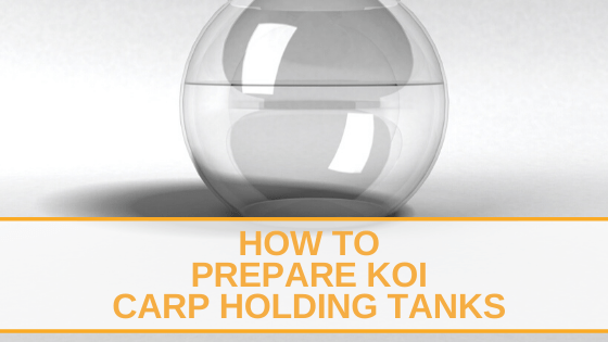 How to Prepare Koi Carp Holding Tanks