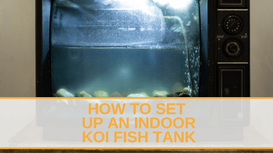 How to Set Up an Indoor Koi Fish Tank