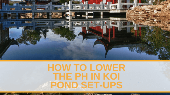 How to lower the PH In Koi Pond Set-ups