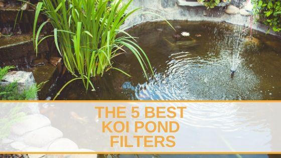 The 5 Best Koi Pond Filters