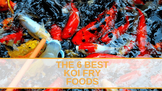 The 6 Best Koi Fry Foods