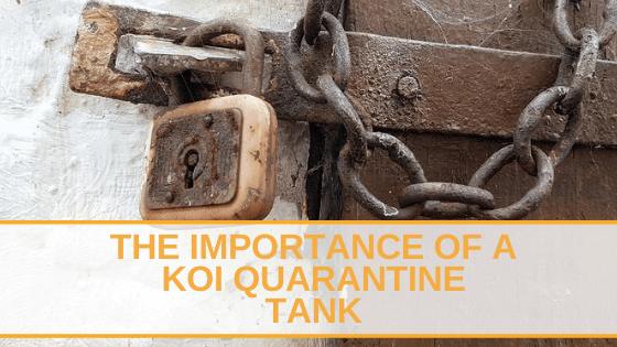 a koi quarantine tank