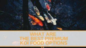 Premium Koi Food Options