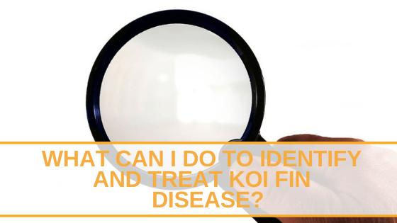 koi fin disease