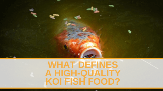 What Defines a High-Quality Koi Fish Food?
