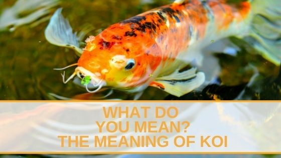 Meaning Of Koi