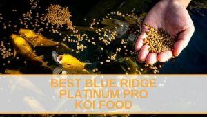 BEST BLUE RIDGE PLATINUM PRO KOI FOODS