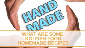 koi fish food homemade