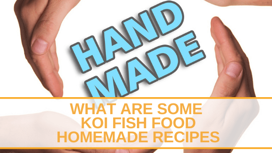 koi fish food homemade