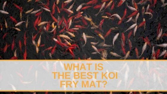 Koi Fry Mat