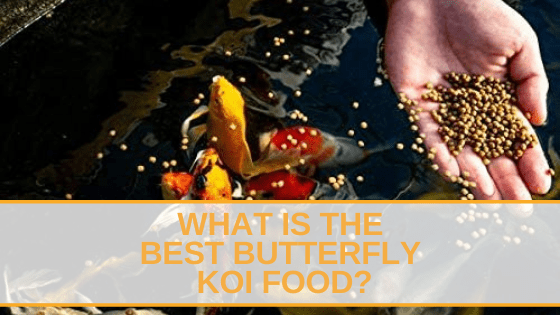 Butterfly Koi Food
