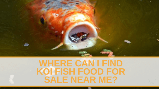 koi fish food for sale near me