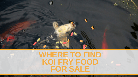 koi fry food for sale