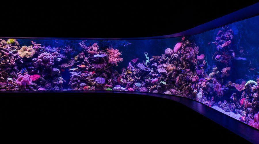 How to Set Up an Indoor Koi Fish Tank