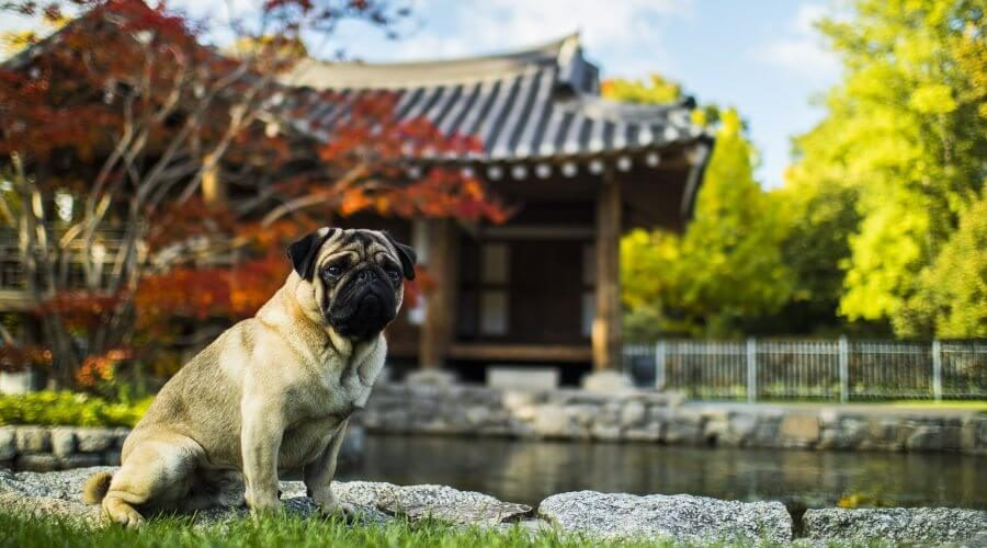 10 Tips for Keeping Your Pond Safe for Dogs