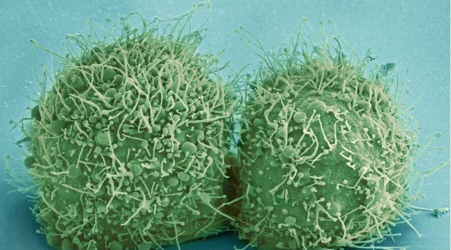 koi fish sickness symptoms