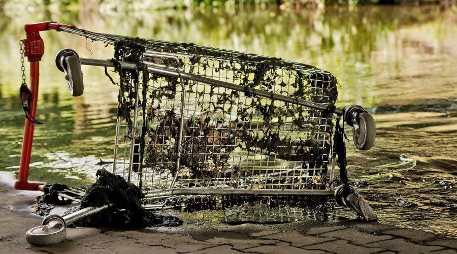 Where Can I Hire Someone for Koi Pond Maintenance Near Me?